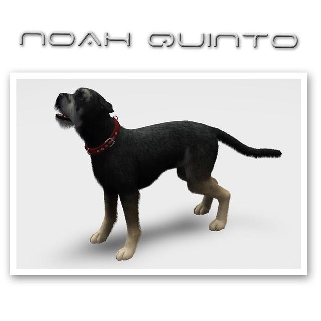 Noah Quinto