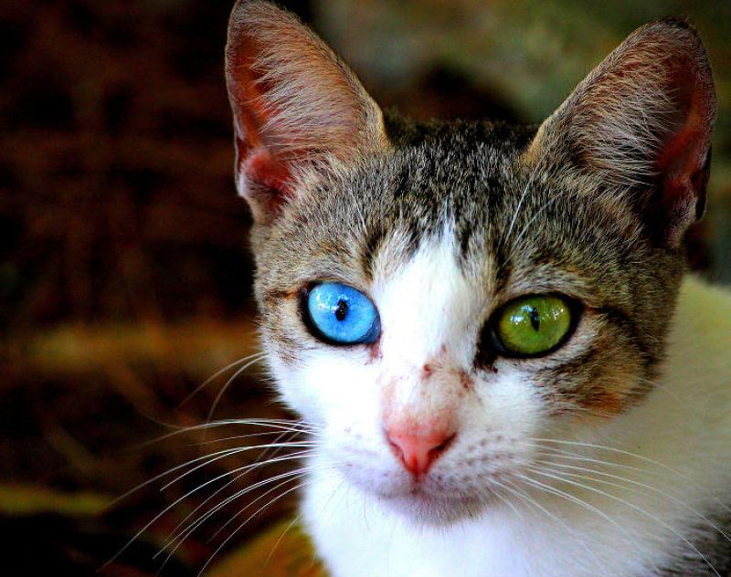 20 animais extraordinariamente belos com olhos ímpares 15