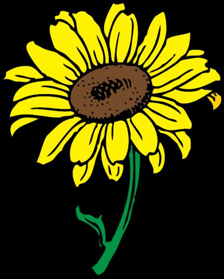 78 Gambar Animasi Bergerak Bunga Matahari Terlihat Keren