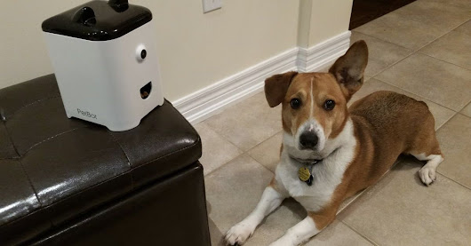 PetBot lets your adorable pets send you video 'selfies'