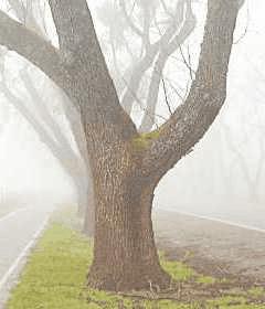 Come isolare l'albero?