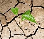 drought resistance