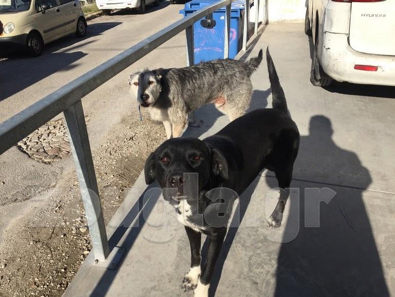 Τα δύο από τα 4 σκυλιά που διασώθηκαν, χάρη στα γαβγίσματα του 'Ιντεφίξ' (πίσω)