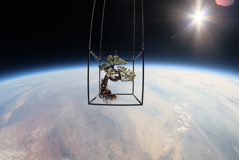 azuma makoto sends 50 year old bonzai tree into space for exobiotanica project