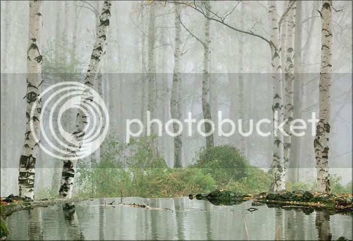 photo Evgeni-Donev-4_zpsjqptgsv6.jpg