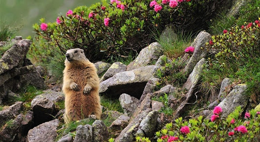 Groundhog Says: Here Are 5 Reason to Sell Before Spring! - LVH