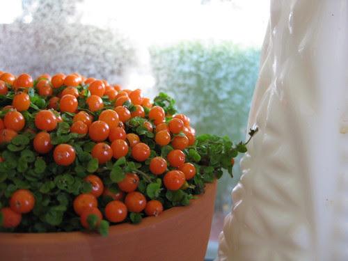orange and cheery