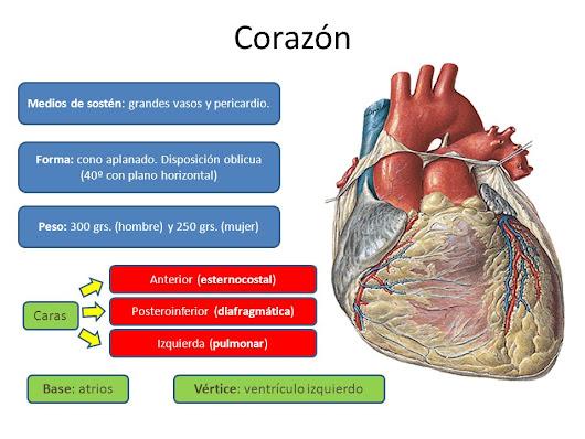 PResentación de anatomia del corazón. muy clara!!!