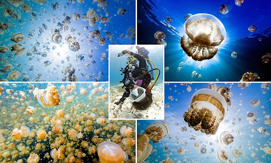 Photographer takes selfies with myriad of jellyfish in saltwater lake