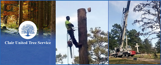 C.U.T.S. (Clair United Tree Service)	 is a Tree Service in Lithonia, GA