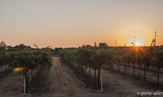 Wine Bloggers Meet in Lodi, California Wine Region - Adventures of a Carry-On