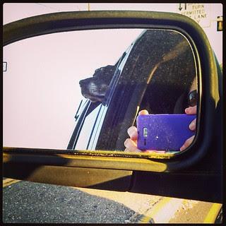 Cruising with Lola #dogstagram #dobermanmix #hangyourheadoutthewindow #love