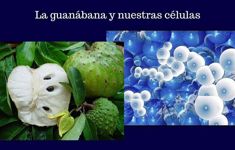 guanabana y las células