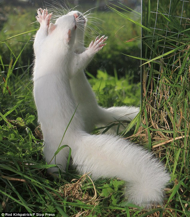 Give me a hug: Snow White has been nursed back to health after being attacked by a pair of vicious grey squirrels