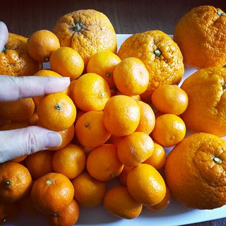 Seriously love these little kishu mandarins! Next to some satsumas. #farmersmarket