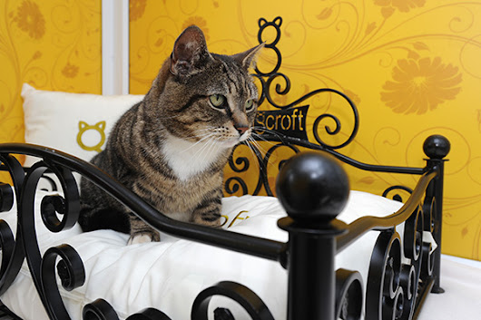 My Stray cat would love to stay at the Longcroft Cat Hotel #CAT #LONGCROFTCATHOTEL #LUXURY