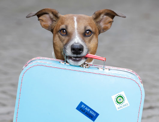 Best Websites for Planing a Dog Friendly Vacation