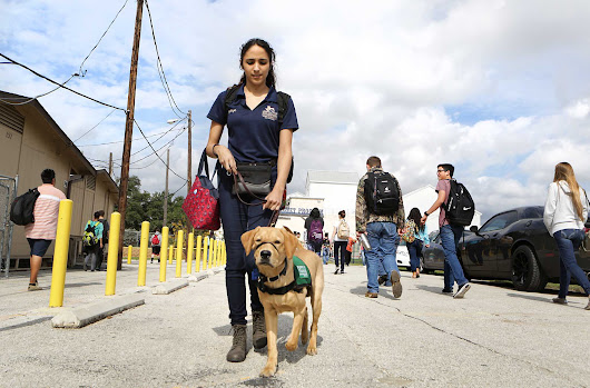 High school launches guide dog training program