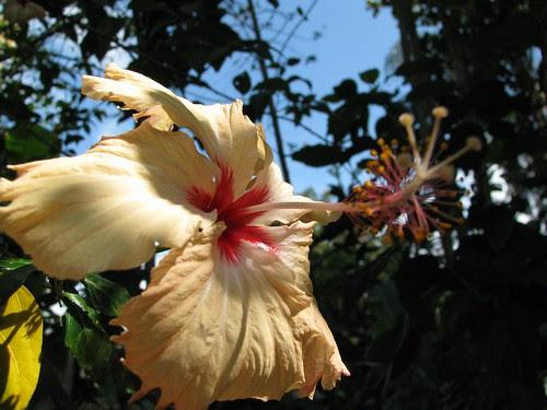 flower ilha grande