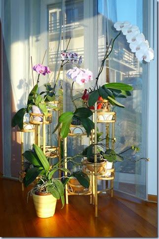 orhideje 03