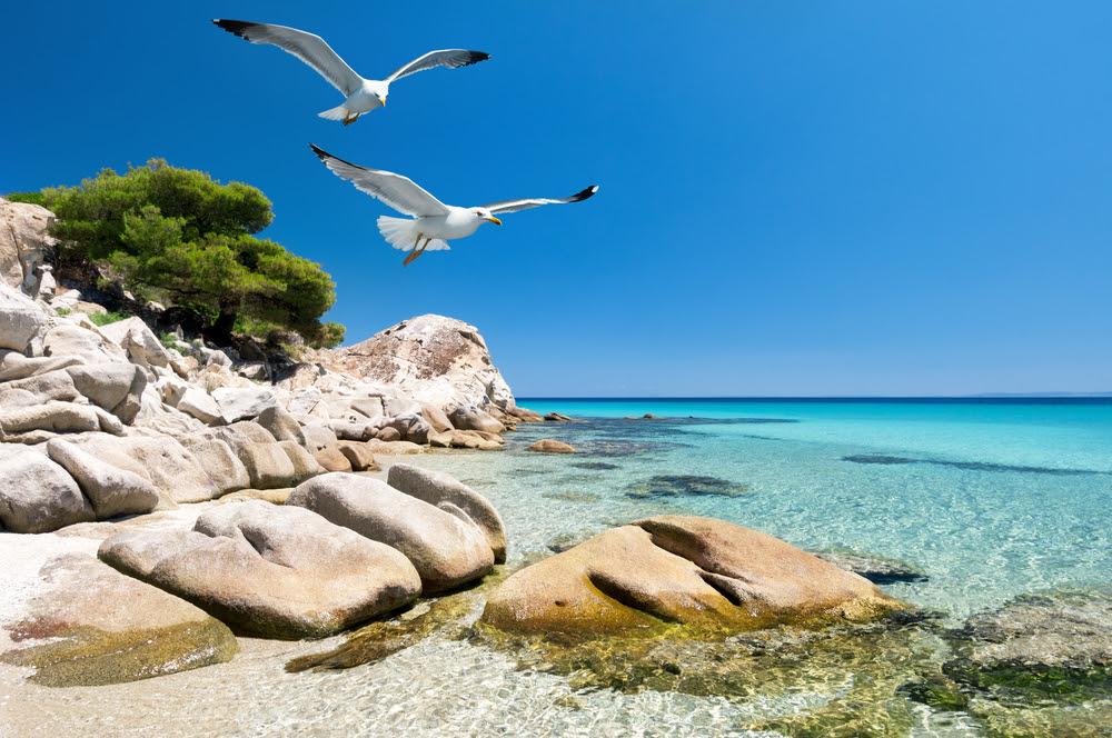 http://www.todayifoundout.com/wp-content/uploads/2014/01/seagulls.jpg