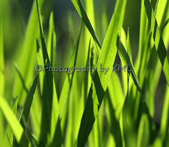 blades of green grass in the spring