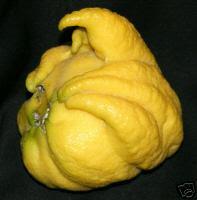 LemonFinger