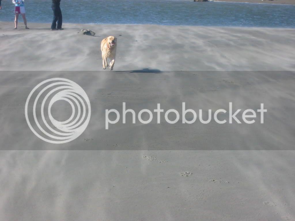 Windswept beach & dog