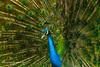 Burung-Burung Indonesia Yang Eksotis
