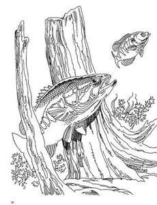 bass fishing on Pinterest | Bass Fishing, Fish Wall Art ...