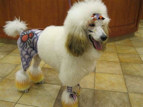 118 best images about Dog Halloween Costumes on Pinterest