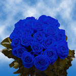 50 Blue Roses by GlobalRose
