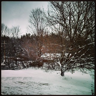 #snow day! We got 9.5 inches #newengland #tree #winterwonderland