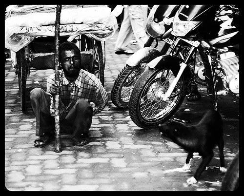 Apni Gali Main Kutta Bhi Sher Hota Hai by firoze shakir photographerno1