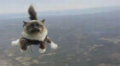 Iklan kucing terbang (Foto: Youtube)