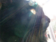 Huggy Bear in the sun