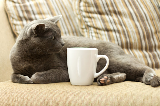 What Entrepreneurs Can Learn from Purringtons Cat Cafe | Bplans