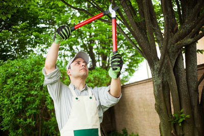 Tree Trimming and Pruning │ Lake Stevens │ Pro-Cut Tree Service