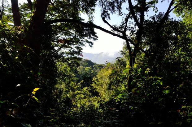 Gorilla Trekking: Trailing the Mountain Gorillas of Bwindi Impenetrable Forest