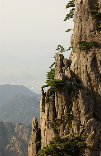 trees on cliffs, China by Jerrold