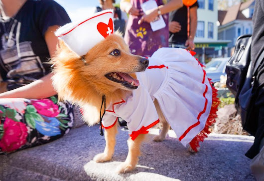 "Dogs in Costume?! The Cutest Fashion Show in Boston. | Around the World ""L"""