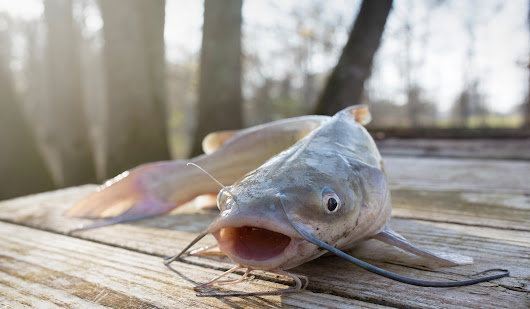 The 4 Best Types of Catfish Rigs | OutdoorHub