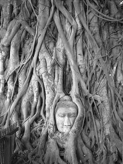 Thailand '06 - 09 Buddha head at Ayuthaya
