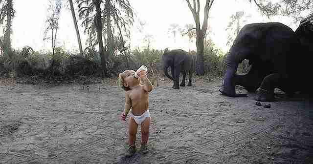 Τίπι Ντεγκρί, το κορίτσι που μεγάλωσε παρέα με τα άγρια ζώα