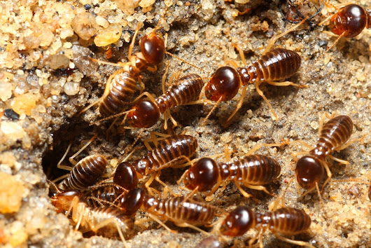 Pest Control West Palm Beach FL | How to Spot Termites in Your Home