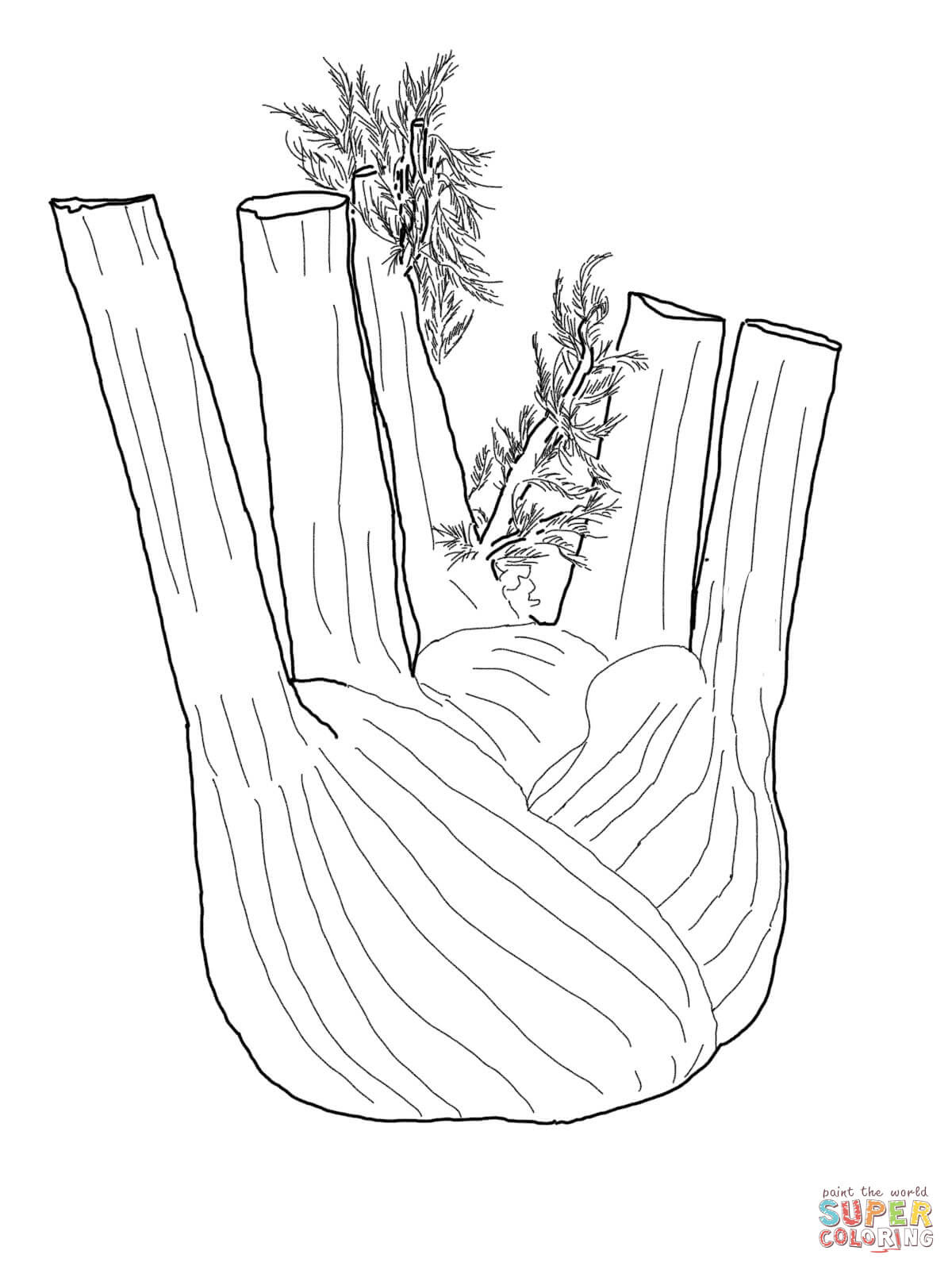 fennel root coloring page