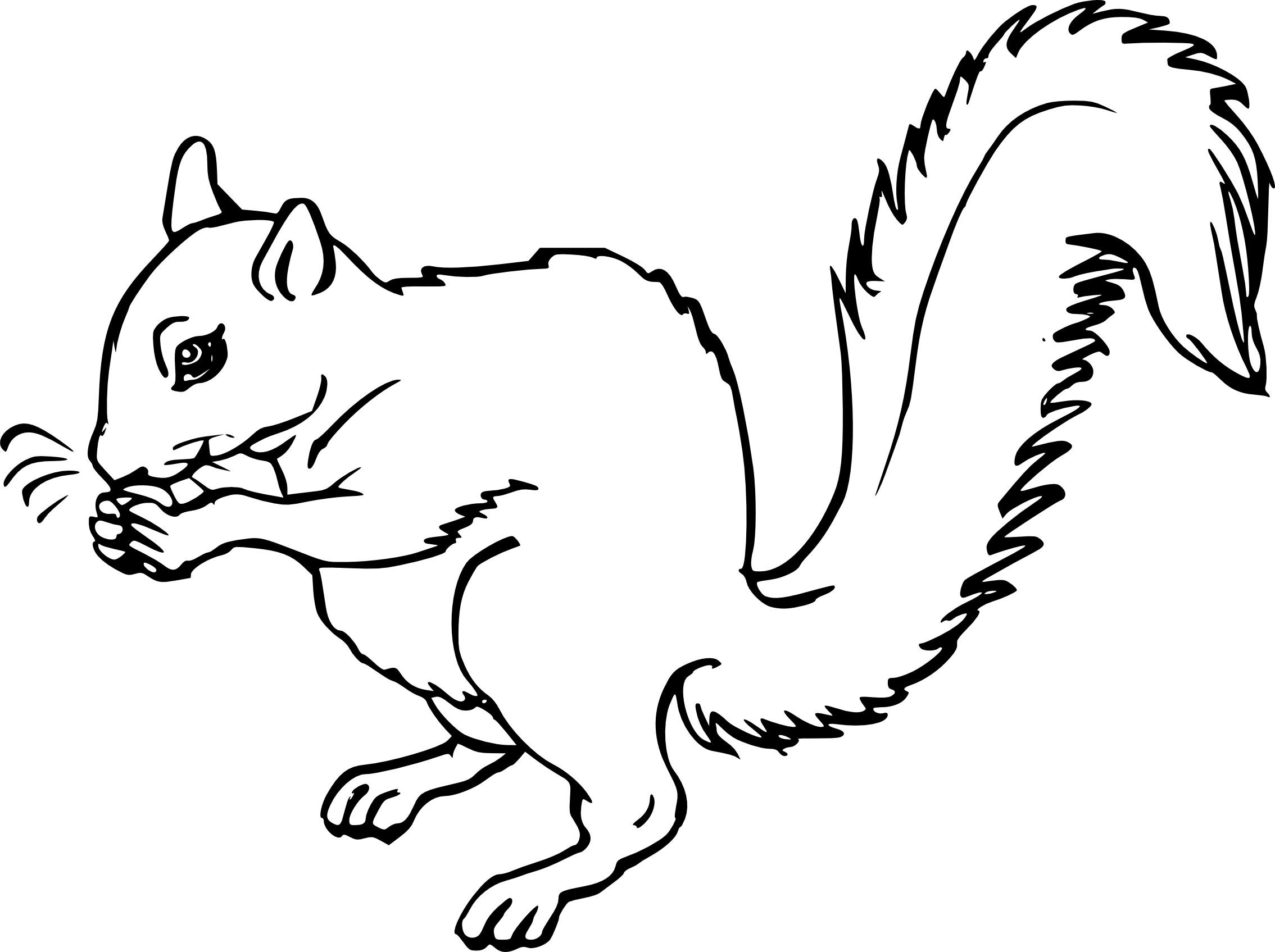 Coloriage écureuil Et Dessin à Imprimer