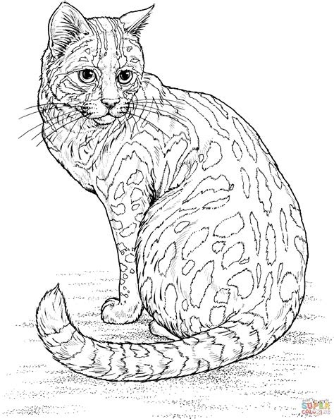 leopard cat coloring page  printable coloring pages