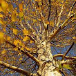 Fall Tree Care - Horticulture