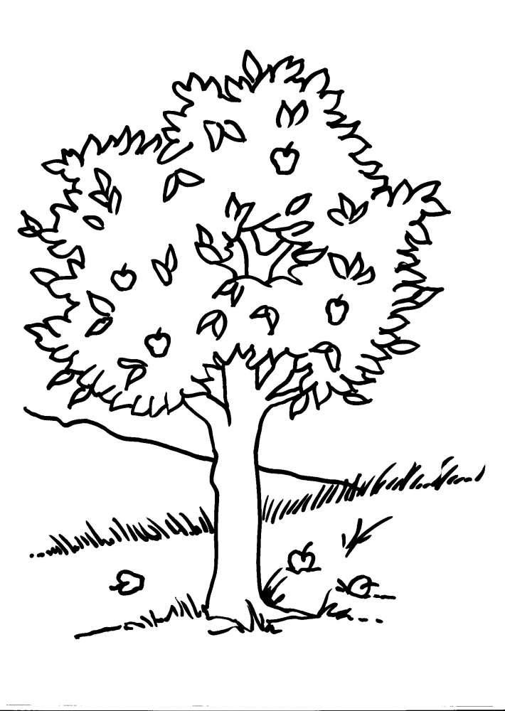 Disegno Albero Da Coloraredisegno Foglia Da Colorarepianta Da C